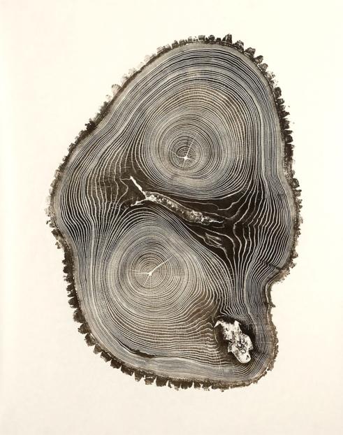 tree trunk 2