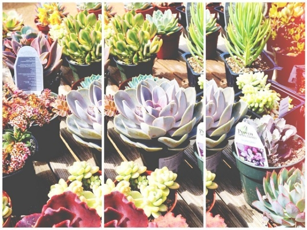 1succulents_original