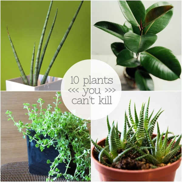 plant collage